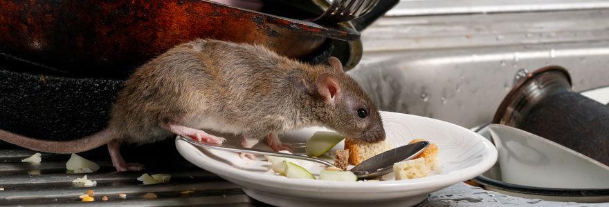 les rats musqués
